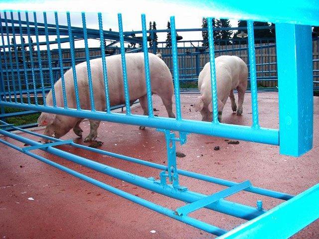 Покрытие для животных
